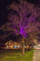 CRANLEIGH-TREES