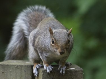 Squirrel Close Up – by Andrew